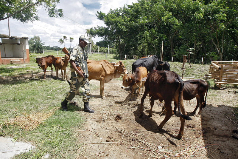 2017 10 05T062735Z 1 LYNXMPED94090 RTROPTP 0 MYANMAR ROHINGYA INDIA COWS 1 - India struggles to rein in border flows of cattle and Rohingya