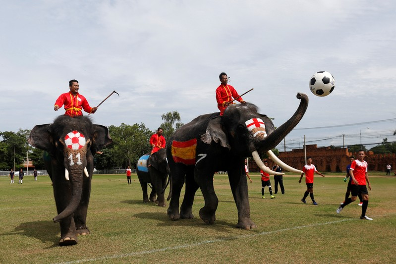 Elephants play soccer during an anti-gambling campaign for school children in Ayutthaya