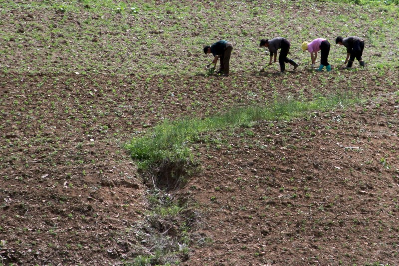 North Korean farm in the field, along the Yalu River, in Sakchu county