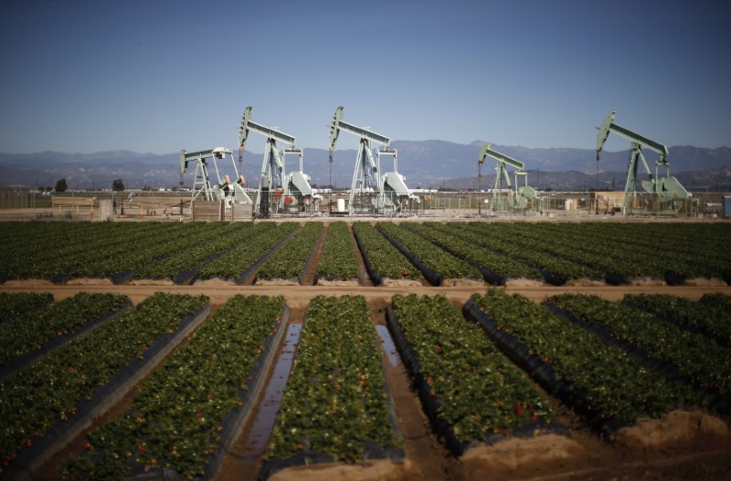 Oil pump jacks are seen next to a strawberry field in Oxnard