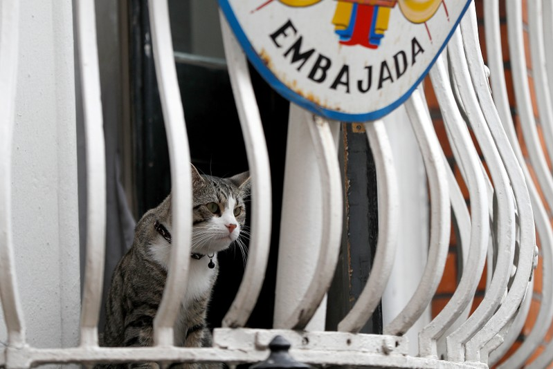 FILE PHOTO: Julian Assange's cat sits on the balcony of Ecuador's embassy in London
