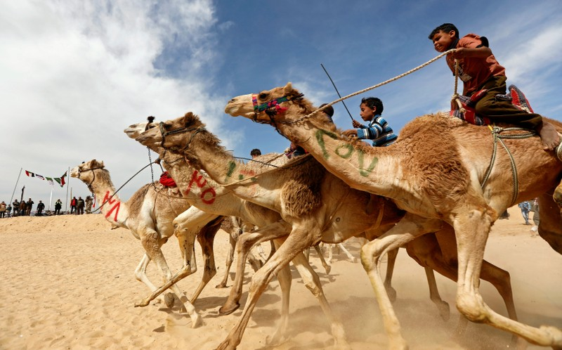 Jockeys, most of whom are children, compete during the 18th International Camel Racing festival at the Sarabium desert in Ismailia