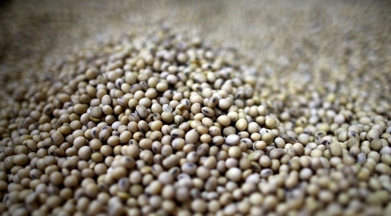 FILE PHOTO: Soy beans are seen at storage plant in Carlos Casares