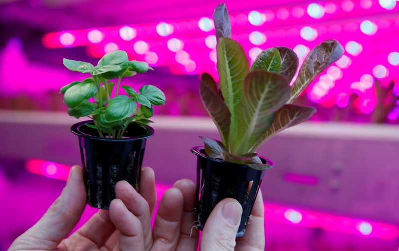 IKEA to test container farming technologyas part of their sustainability initiative