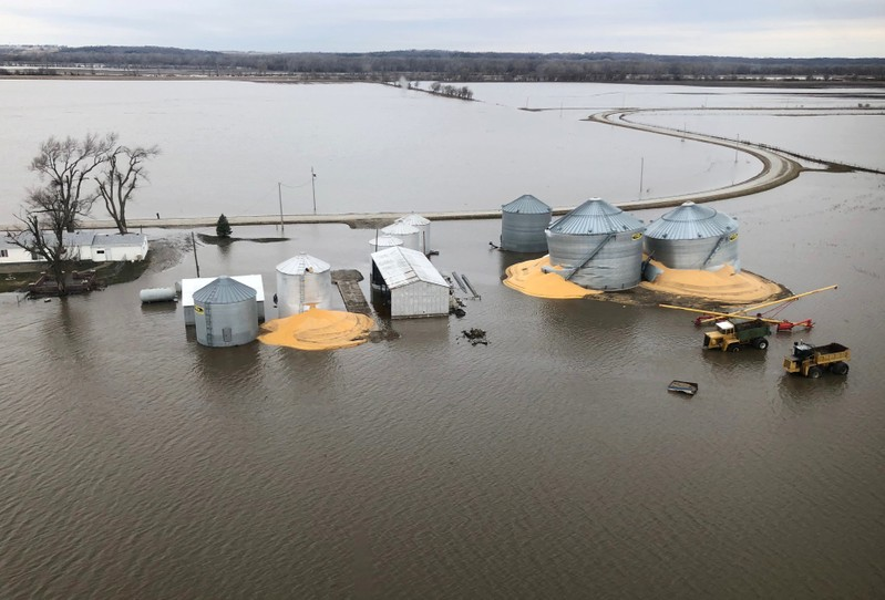 Contents of grain silos which burst from flood damage are shown in Fremont County, Iowa