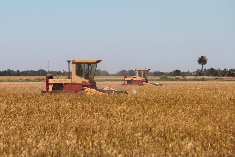 Harvesters work on early crop of wheat farming harvested in the spring in Davis