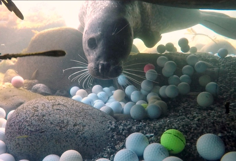 Lost golf balls are pictured on the floor of the Pacific Ocean in Stillwater Cove near Pebble Beach Golf Links in Pebble Beach in this handout photo
