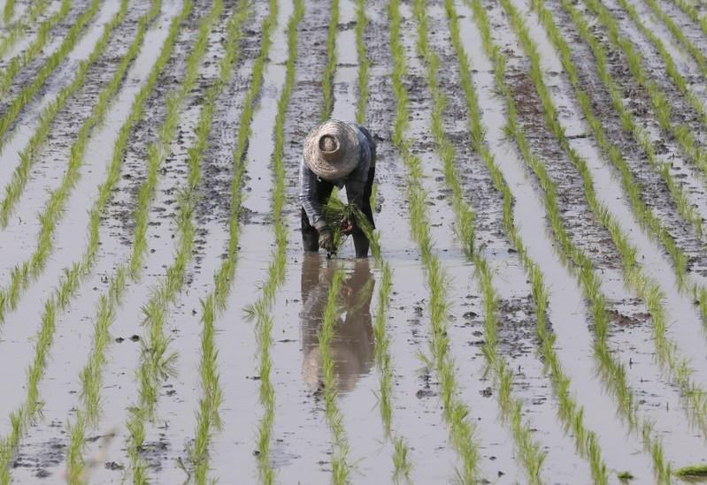 Thailand plans $10 billion stimulus to support economy   One