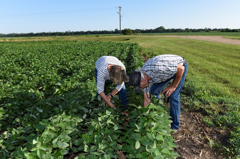 FILE PHOTO: Paul and Vanessa Kummer check soybeans near Colfax, North Dakota