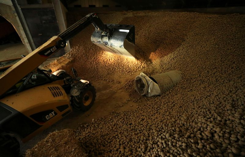 A farmer works among tons of potatoes part of which is leftover due to the closure of restaurants and borders following the coronavirus disease (COVID-19) outbreak, near the city of Moucron