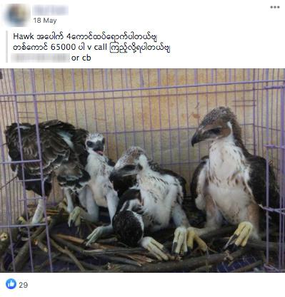 FILE PHOTO: Facebook page selling wildlife in Burmese seen in screenshot by WWF