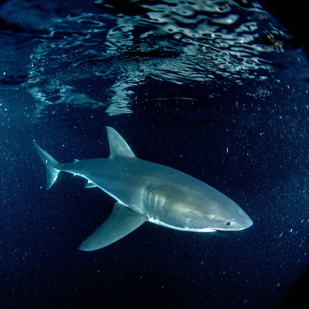 'Shark Week' kicks off with Mike Tyson and a major shark breach