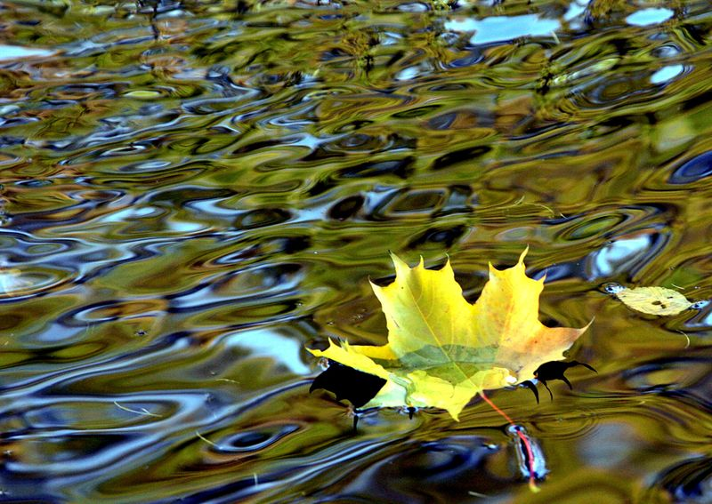FILE PHOTO: A yellow leaf drifts in a pond in a park in St. Petersburg