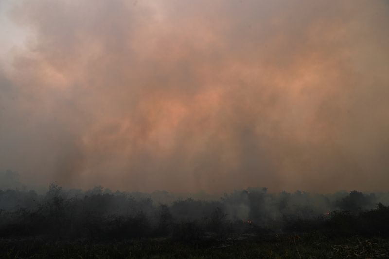 Smoke rises from a fire in The Pantanal, the world's largest wetland, in Pocone